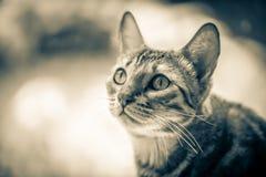 Little cat Royalty Free Stock Photos