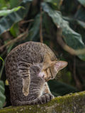 Little cat Stock Images