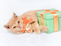 Little cat and the gift. Little cat lying next to the box with a gift stock images