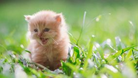 Little cat in grass , outdoors royalty free stock photography