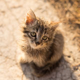 Little cat with green eyes. Small gray fluffy cat sitting on the ground without looking at the camera. backlight at morning, close-up, square shot, background is Stock Photography