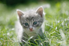 Little cat in a green grass. Portrait of a cute little cat in a green grass Royalty Free Stock Image