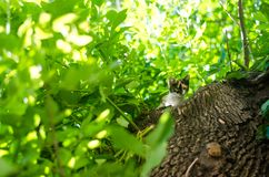 Little cat on green tree . Beautiful cat playing in tree. / Royalty Free Stock Photos