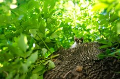 Little cat on green tree . Beautiful cat playing in tree. / pet Stock Photography