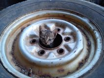 Little cat hiding. In the wheel of a car Stock Photo
