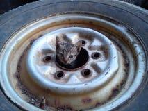 Little cat hiding Stock Photo