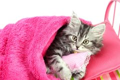 Little cat holding pillow Royalty Free Stock Image
