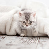 Little cat at home. Curious gray kitten. Little cat at home. Small pet royalty free stock photography