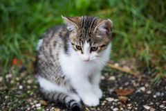 Little cat ist sitting in grass. Cute, fluffy stock photography