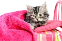Little cat on little bed Royalty Free Stock Photography