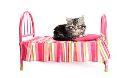 Little cat on little bed Stock Photos