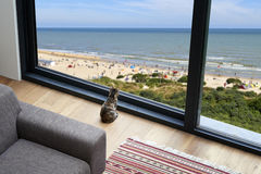 Little cat looking outside at beach and seaside Royalty Free Stock Image