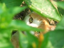 Little cat looking trough leafs. Little cat looking trough blurred green leafs Stock Images