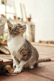 Little cat looking up. Copy space Stock Photo