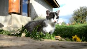 Little cat looks at the camera stock video footage