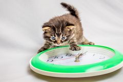 Little cat looks at  clock. Time is running fast. It`s time to h. Ave dinner. Lunch Break. The New Year is coming. Soon  New Year Royalty Free Stock Images