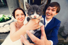 Little cat looks surprised being held by newlyweds Royalty Free Stock Photography