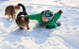 Little cat lover. Little boy taking care of cats in winter Stock Photos