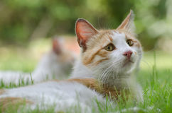 Little cat lying on the grass Stock Image
