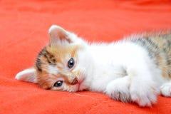 Little cat Stock Image