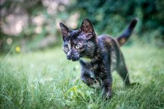 Little Cat in my Backyard. Curious Little Cat looking at something and preparing to ` attack stock photo