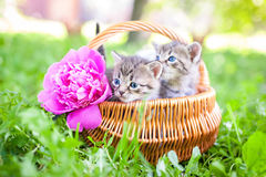 Little Cat, Outdoor Royalty Free Stock Photo