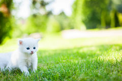 Little cat, outdoor Royalty Free Stock Image