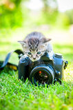 Little cat, outdoor Royalty Free Stock Photos