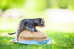 Little cat, outdoor Stock Photo