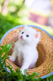 Little cat, outdoor Royalty Free Stock Images
