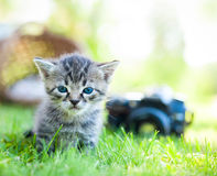 Little cat, outdoor Stock Images