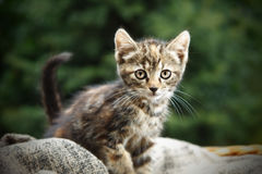Little cat outdoors Stock Image