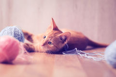 Little cat playing with balls of wool Stock Image