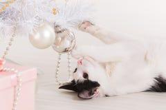 Little cat playing with Christmas tree ornaments Foto de archivo libre de regalías