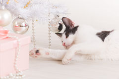 Little cat playing with Christmas tree ornaments fotos de archivo libres de regalías