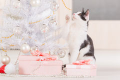 Little cat playing with Christmas tree ornaments Royalty Free Stock Image