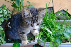Cat playing with plants royalty free stock image
