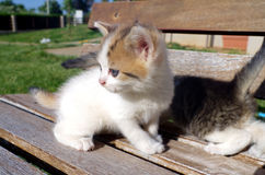 Little cat playing on a wooden bench. Royalty Free Stock Image