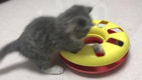 The little cat plays with the toy alone. The little cat can`t stop playing with her toys stock footage