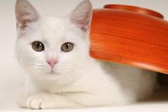 Little cat portrait Stock Images