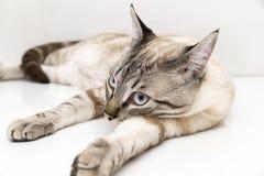 Little cat posing Stock Image