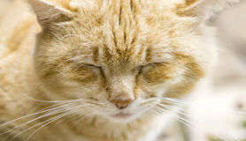 Little cat resting Royalty Free Stock Photo