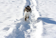 Little cat running through the snow Stock Photo