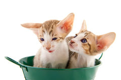 Little cat`s in green bucket Royalty Free Stock Photography