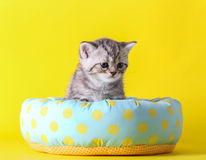 Little cat sit on bed. With yellow background Stock Images