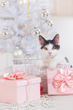 Little cat sitting with Christmas gifts Stock Image