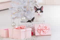 Little cat sitting with Christmas gifts Royalty Free Stock Image