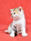 Little cat. Sitting on red blanket Stock Photo