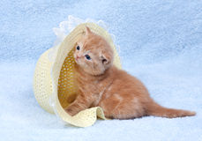 Little cat sitting in the straw hat Royalty Free Stock Photos