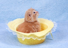 Little cat sitting in the straw hat Royalty Free Stock Images